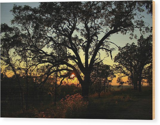 Wood Print featuring the photograph Good Night Tree by Viviana  Nadowski