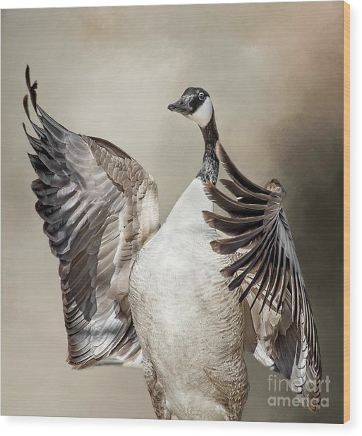 Goose Chase Wood Print