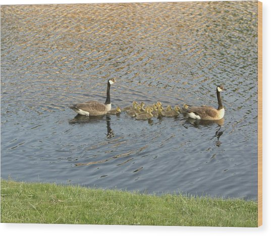 Goose Pond 1 Wood Print by Nancy Ferrier