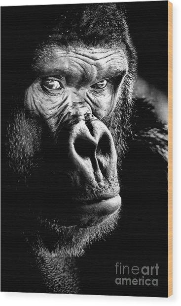 Gorilla Canvas Print, Photographic Print, Art Print, Framed Print, Greeting Card, Iphone Case, Wood Print