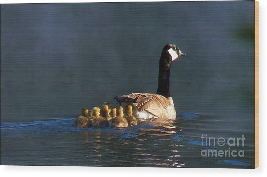 Gosling On Parade Wood Print