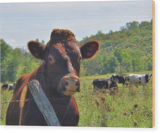 Got Milk Herd Wood Print by JAMART Photography