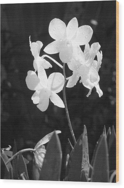 Grace Wood Print by Jim Derks