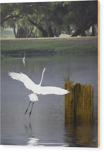 Graceful Wood Print by Cecil Fuselier