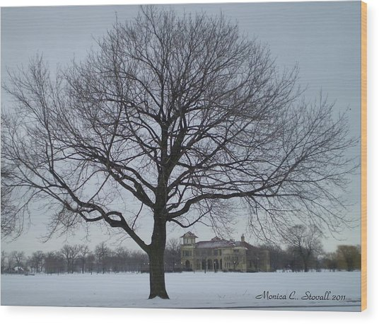 Graceful Tree And Belle Isle Eating Casino In Distance Wood Print