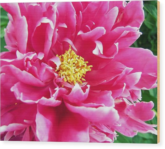 Gram's Peony Wood Print by JAMART Photography