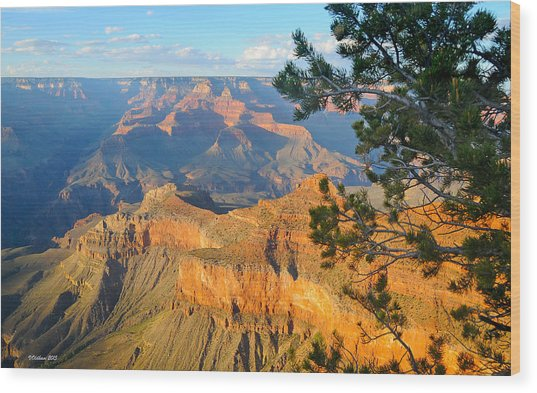 Grand Canyon South Rim - Pine At Right Wood Print