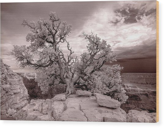 90285 Grand Cyn Pinon On Rock White Wood Print