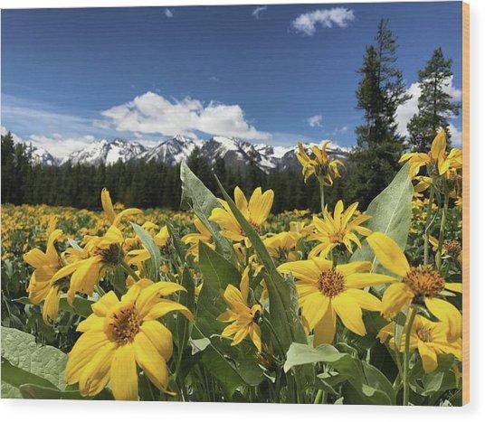 Grand Teton Mountains Wood Print