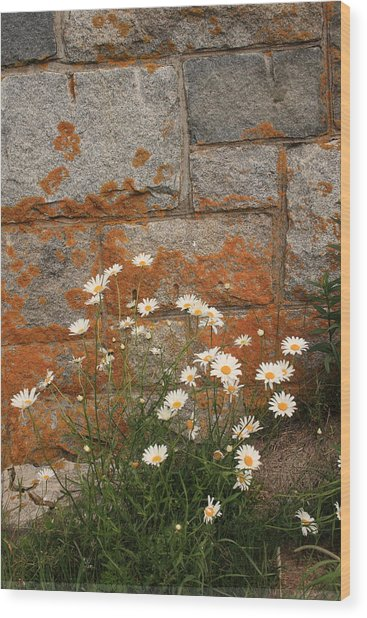 Granite Daisies Wood Print
