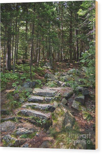 Granite Steps, Camden Hills State Park, Camden, Maine -43933 Wood Print