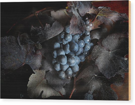 grape vine I Wood Print by Jon Daly