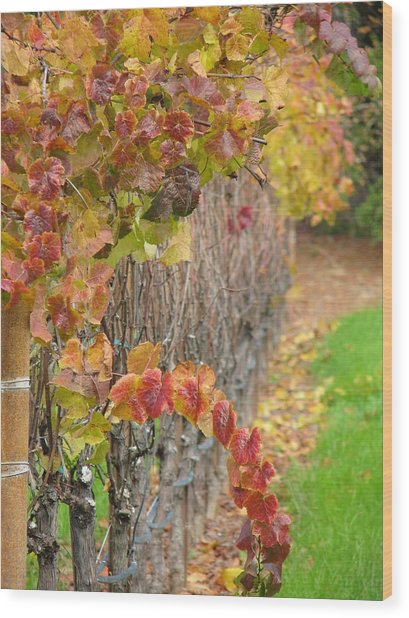 Grape Vines In Fall Wood Print by Jeff White