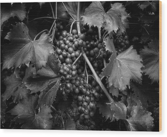 Grapes In Black And White Wood Print