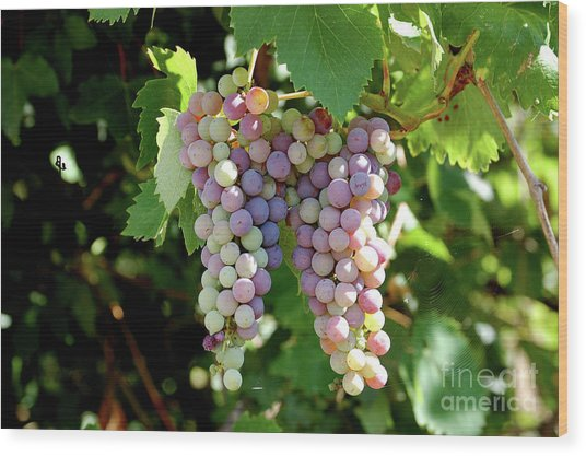 Grapes In Color  Wood Print
