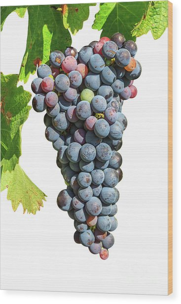 Grapes On Vine Wood Print