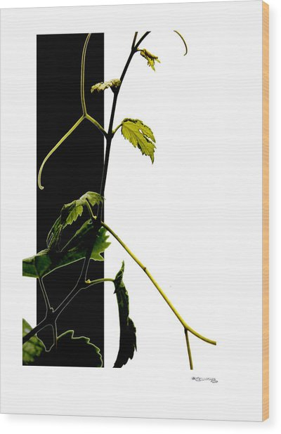 Grapevine Collage Wood Print by Xoanxo Cespon