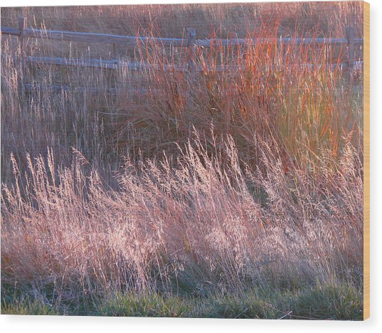 Grasses 1 Wood Print
