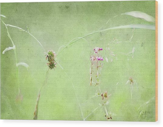 Grasses And Blooms Wood Print