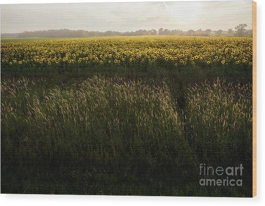 Grasses And Sunflowers 1 Wood Print by Ernesto Ruiz