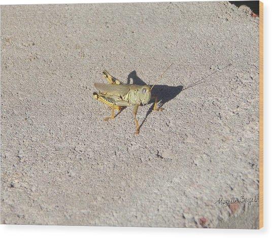 Grasshopper Curiosity Wood Print
