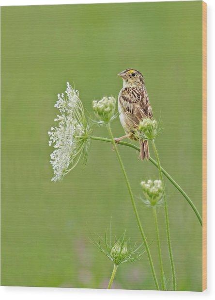 Grasshopper Sparrow Wood Print