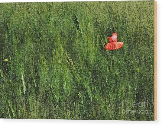 Grassland And Red Poppy Flower 2 Wood Print