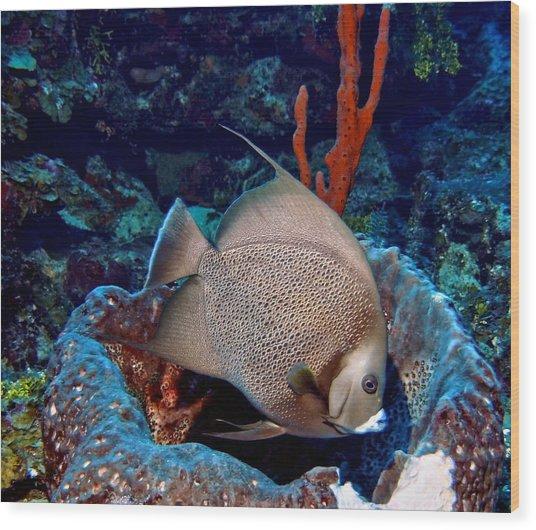 Gray Angel Fish And Sponge Wood Print