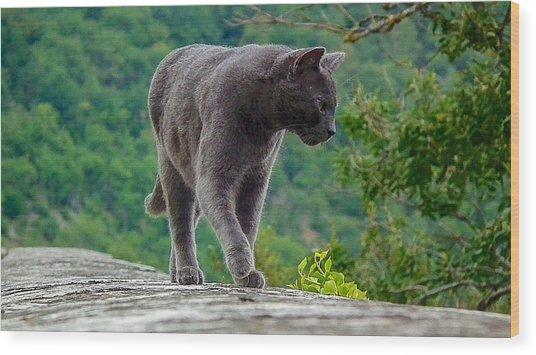 Gray Cat Stalking Wood Print