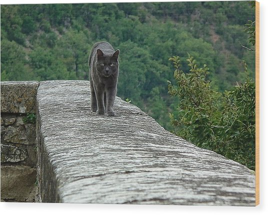 Gray Cat Prowling Wood Print