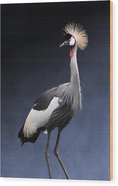 Gray Crowned Crane Wood Print