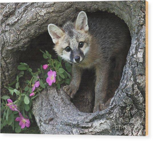Gray Fox Kit Wood Print
