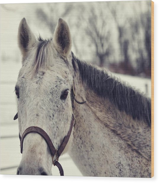 Gray On Winter White Wood Print by JAMART Photography