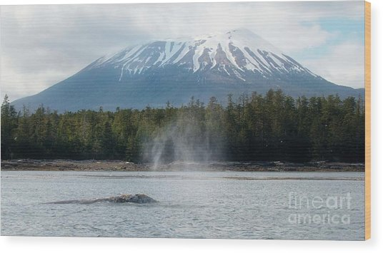 Gray Whale, Mount Edgecumbe Sitka Alaska Wood Print