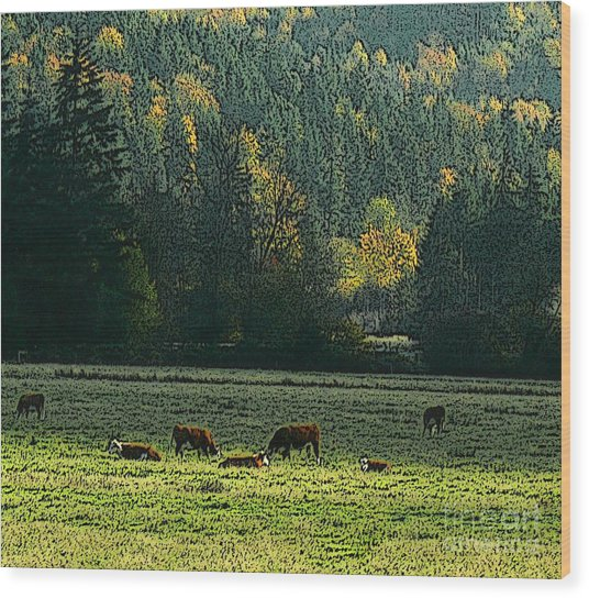 Grazing In The Skokomish Valley Wood Print