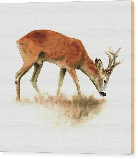 Grazing Roebuck Watercolor Wood Print