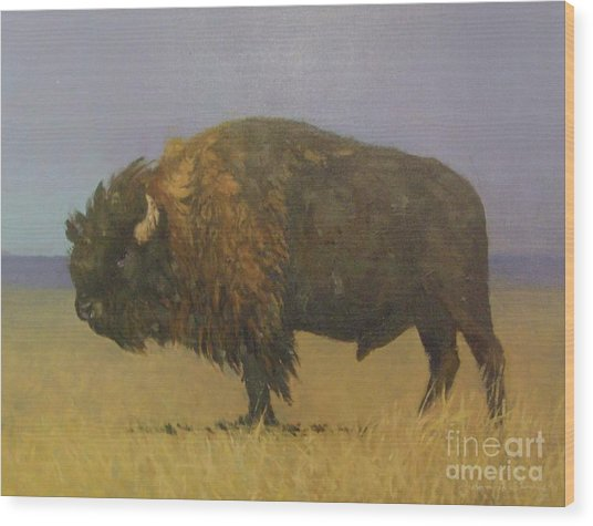 Great American Bison Wood Print