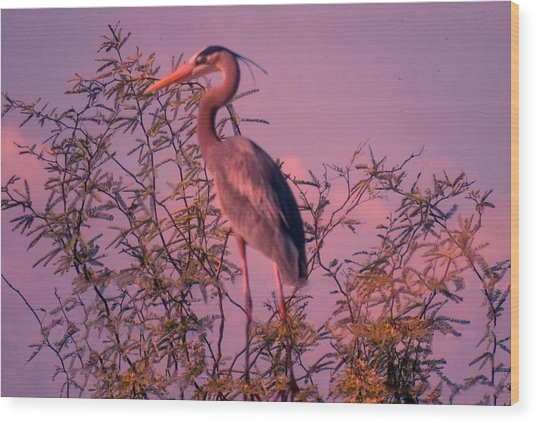 Great Blue Heron - Artistic 6 Wood Print