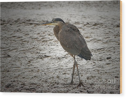 Great Blue Heron In The Snow Wood Print by Sharon Talson