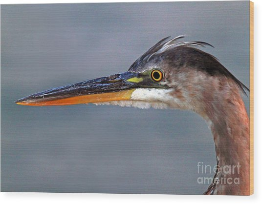 Great Blue Heron Wood Print by Jim Beckwith