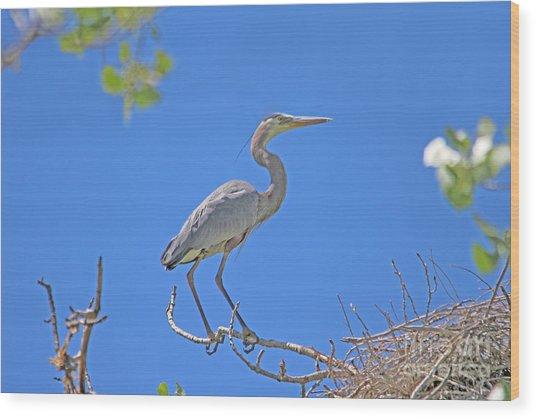 Great Blue Heron Nest Protector  Wood Print