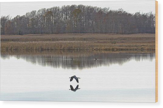 Great Blue Heron Over Glassy Water Wood Print