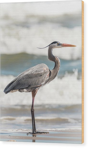Great Blue Heron Profile Wood Print