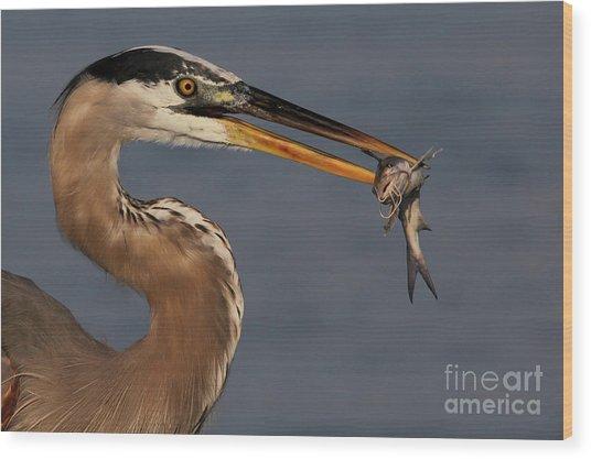 Great Blue Heron W/catfish Wood Print
