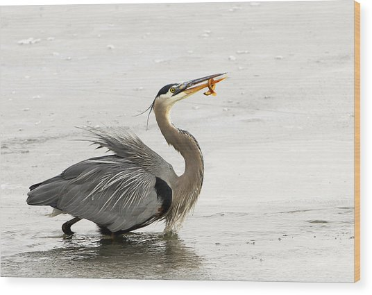 Great Blue Heron With Leech Wood Print by Dennis Hammer