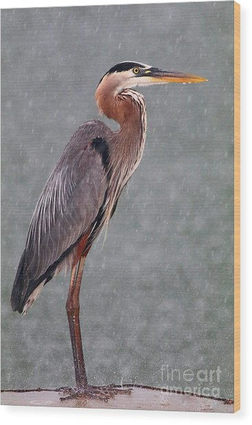 Great Blue In The Rain Wood Print