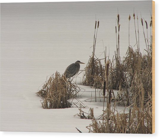 Great Blue In White Wood Print by Athena Ellis