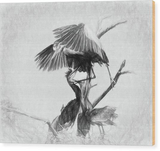 Great Blues II Sketch Wood Print