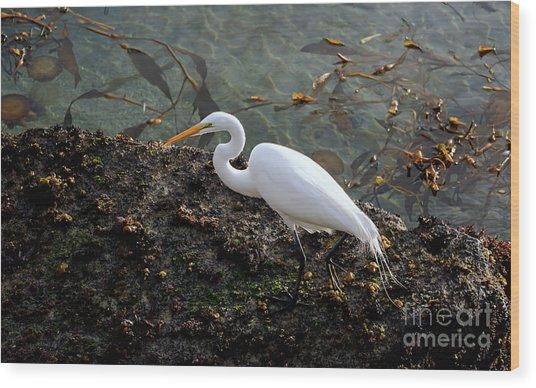 Great Egret At A Low Tide Wood Print
