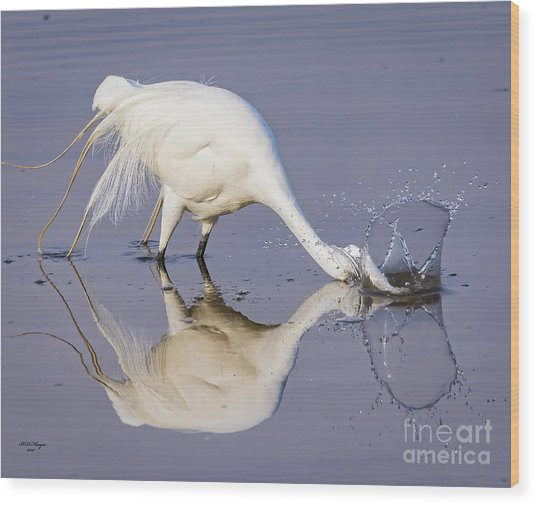 Great Egret Dipping For Food Wood Print